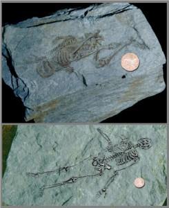 1- Antarktika'da bulunan 600 milyon yıllık iskelet